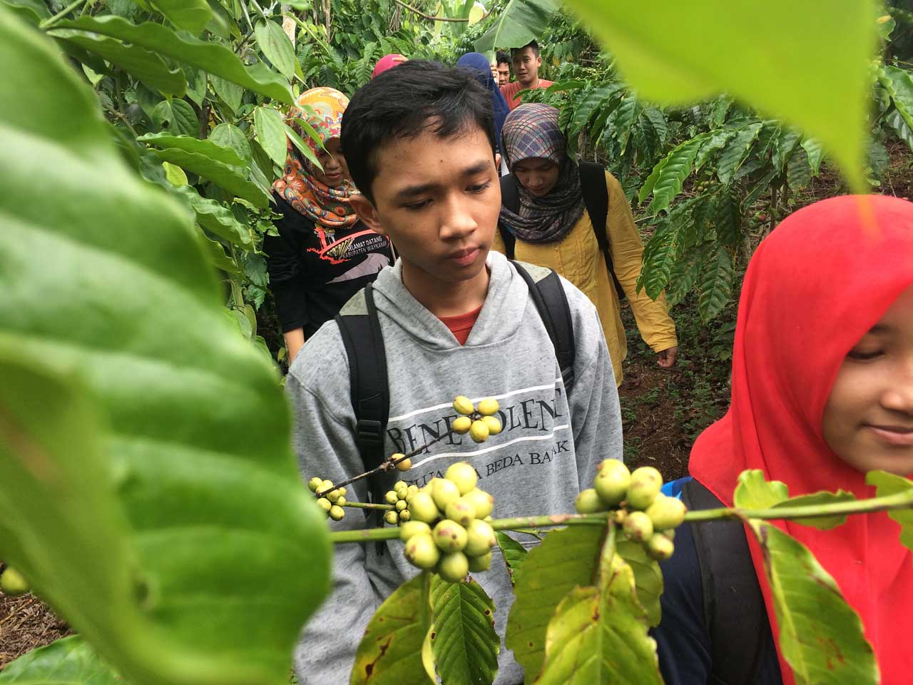 Melwati kebun kopi menuju Curup Anggal - kamera iphone 5s - Yopie Pangkey