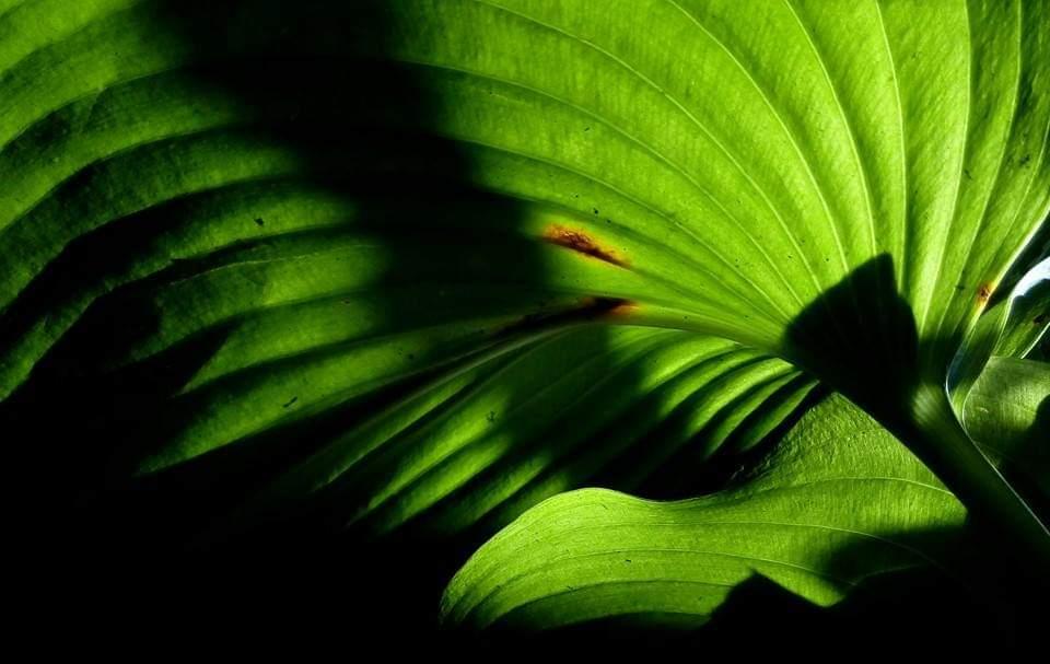 belajar fotografi pemula - Budhi Marta Utama - 8