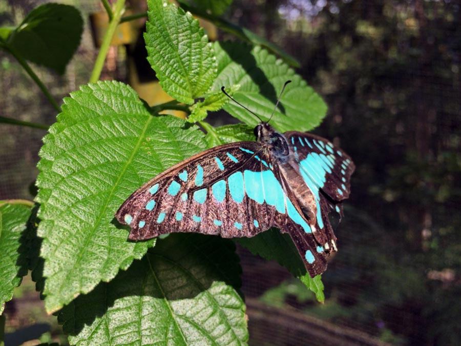 gambar kupu kupu hinggap di daun - yopiefranz.id - yopie pangkey - 2