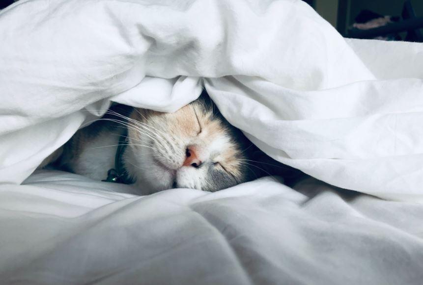 Kucing bersin - Photo by Kate Stone Matheson on Unsplash