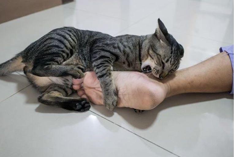 Kucing suka menggigit - ourkindredcatscom