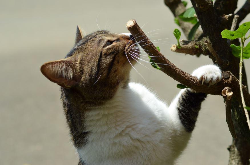 Penyebab Kucing Bersin - Photo by Juan Camilo Guarin P on Unsplash