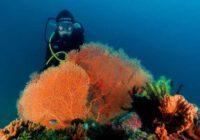 apa itu scuba diving - Jimmy Khadafy Jimboy